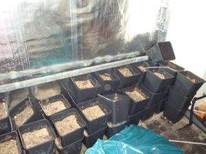 hennepplantage-verwijderen-1-5