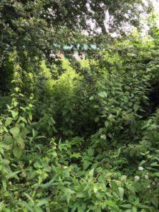 tuin-voor-schoonmaken